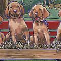Vizsla Pups by Nadi Spencer