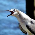 Vocal Sea Gull by John Trommer