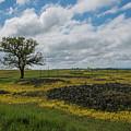 Volcanic Blooms by Barbara Matthews