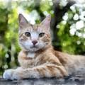 Volterra Italy Cat Watercolor by Edward Fielding