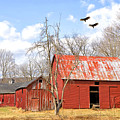 Vultures Over Barn by Paul Fell