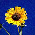 Wabi-sabi Sunflower by Anna Louise