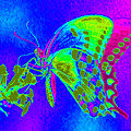 Wacky Butterfly by Tina Meador