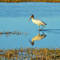 Wadding Wood Stork And Reflection by Bob Phillips