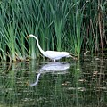 Wading And Waiting by Karen Silvestri