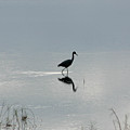 Wading Heron by Frank Russell