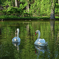 Wagner Vinyard Estate Swans Finger Lakes Lodi Ny by Toby McGuire
