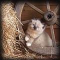 Wagon Wheel Kitty. by Sue Martin