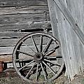 Wagon Wheel by Nancy Taylor