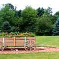 Wagon With Flowers by Corey Ford