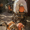 Wagons Ho by Teresa Wilson