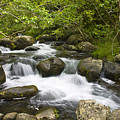 Waihee Valley Stream by Greg Vaughn - Printscapes