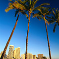 Waikiki Skyline by Carl Shaneff - Printscapes
