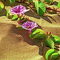 Wailea Beach Morning Glory With Honeybee by Marie Hicks
