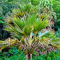 Waimea Palm Study 2 by Robert Meyers-Lussier