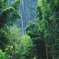 Waimoku Falls by Dave Fleetham - Printscapes