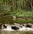 Waipio River by Pamela Walton