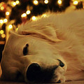Waiting For Santa by Patti Whitten