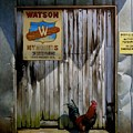Waiting For Watson 2 by Doug Strickland