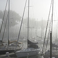 Waiting On The Fog by Laurie With
