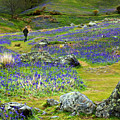 Walk Among The Bluebells by Susan Tinsley