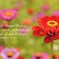 Walk In Love by Kim Warden