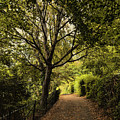 Walk In The Park by Syed Muhammad Munir ul Haq