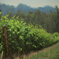 Walk In The Vineyard by Karen Ilari