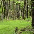 Walk In The Woods by Erik Waltz