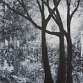 Walk In The Woods by Ervin Sloan