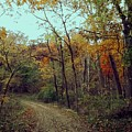 Walk Through Lowell Park by Laura Birr Brown