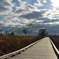 Walk Thru The Marsh by Barbara Treaster