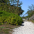 Walk To The Beach by Peggy Starks