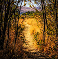 Walk With Me by Wendy Elliott