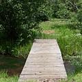 Walking Bridge Over River by Pamela Walrath