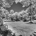 Walking In Clark Gardens by Jeff Breiman