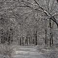Walking In The Woods by David Bearden