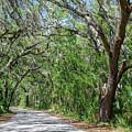 Walking In The Woods Of Amelia Island by Pete Wardrope