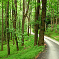 Walking On A Country Road - Appalachian Mountain Backroad by Matt Tilghman