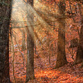 Walking The Afternoon Path by Jeff Folger
