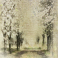 Walking Through A Dream IIi by Dan Carmichael
