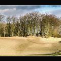 Walking To The Trees by Jan De Graaf