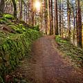 Walkway To Waterfalls by Lynn Bauer