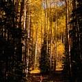 Walking With Aspens by David Lee Thompson
