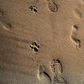 Walking With My Dog by Susanne Van Hulst