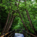 Walkway Tahquamenon Lower Falls Upper Peninsula Michigan Vertical 04 by Thomas Woolworth