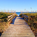 Walkway To The Beach #1 by Joey OConnor