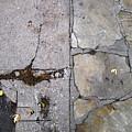 Walkways by Lyle Crump