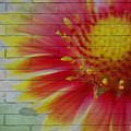 Wall Flower by Donna Bentley