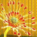 Wall Flower by Tim Allen